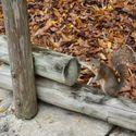 Wiewiórka płatny zabójca