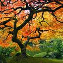 Drzewo...