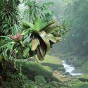 Bromeliads Bocaina, deszczowy National Park Atlantic w Brazyli.