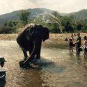 Słoniowa woda