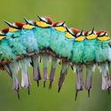 Kamuflaż na gąsienicę