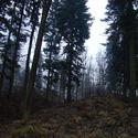 Marcowy las
