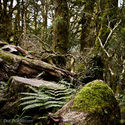 Nowa Zelandia - Las w Fiordland