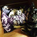 Pies z koteczkami ;)