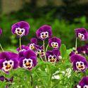 Kwiatki Cię obserwują