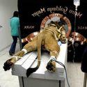 Tymczasem w Metro Goldwyn Mayer...