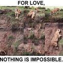 Dla miłości nie ma nic niemożliwego