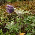 jesienne kwiatowe wybryki :)