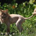 lion .
