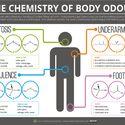Chemia odorów ciała