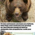 Zwierzęta które uratowały ludzi :)