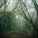 Leśny klimat (7)