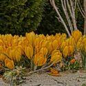 Oznaki wiosny :)  / Własne