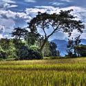 Pole ryżu, Tajlandia