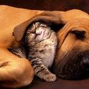pies z kotkiem