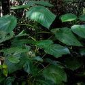 Najciekawsze rośliny na ziemi #10