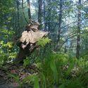 Gdynia - mój las...