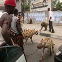 Tymczasem w Nigerii