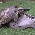 Żółw.