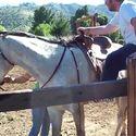 wprawiony jeździec