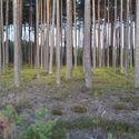 Leśny las