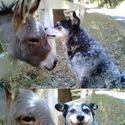 Zwierzęta.