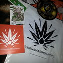 A.M.S greenhouse seeds