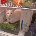 Świeży kot