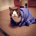 18 najsławniejszych kotów w Internecie.