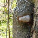 wybuchowe drzewko
