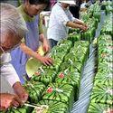 Autentyk. Takie arbuzy uprawia się w Japonii.