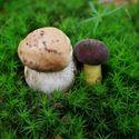 Troche moich fotek z grzybów :D
