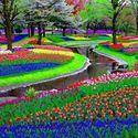 park keukenhof - Lisse, Holandia