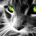 Zielone oczęta