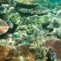 Wielka Rafa Koralowa- Własne