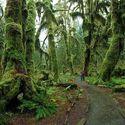 Hoh Rain Forest - USA