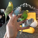 Ptaki