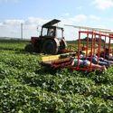 Białoruska myśl techniczna - kombajn do zbierania ogórków