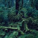 dziewiczy las