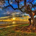 Historia drzew (30)