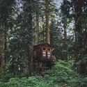 Leśna baza