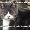 Niedobry kot