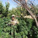Tymczasem w Afganistanie
