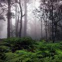 Rain Forest. Leśny klimat (51)