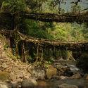 żywy most