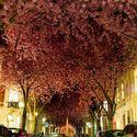 Springtime. Bonn, Germany