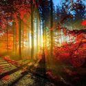 Leśny klimat (33)