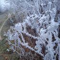 Piękno zimy