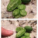 Mikro melony