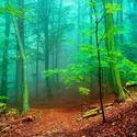 Leśny klimat (55)